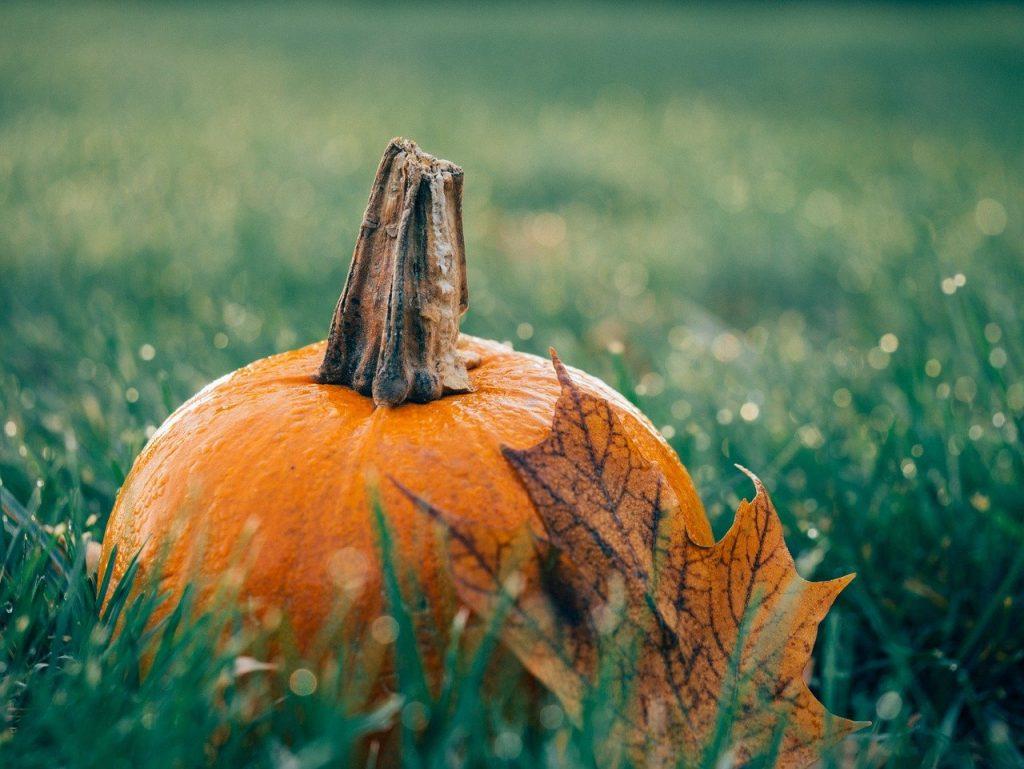 pumpkin, leaf, autumn-1030817.jpg